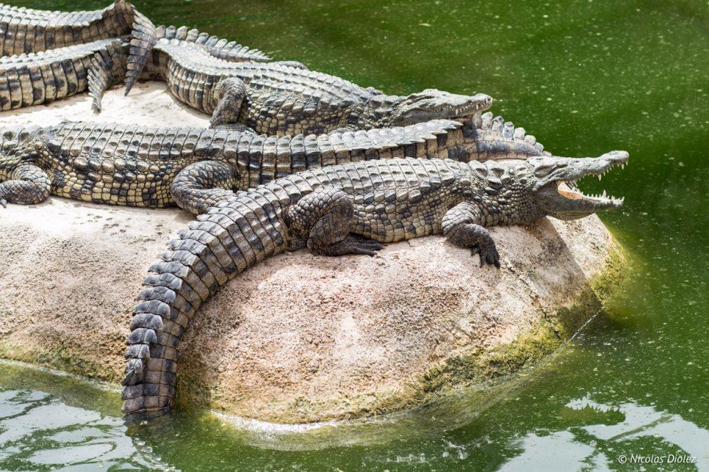 Planète crocodiles.jpg