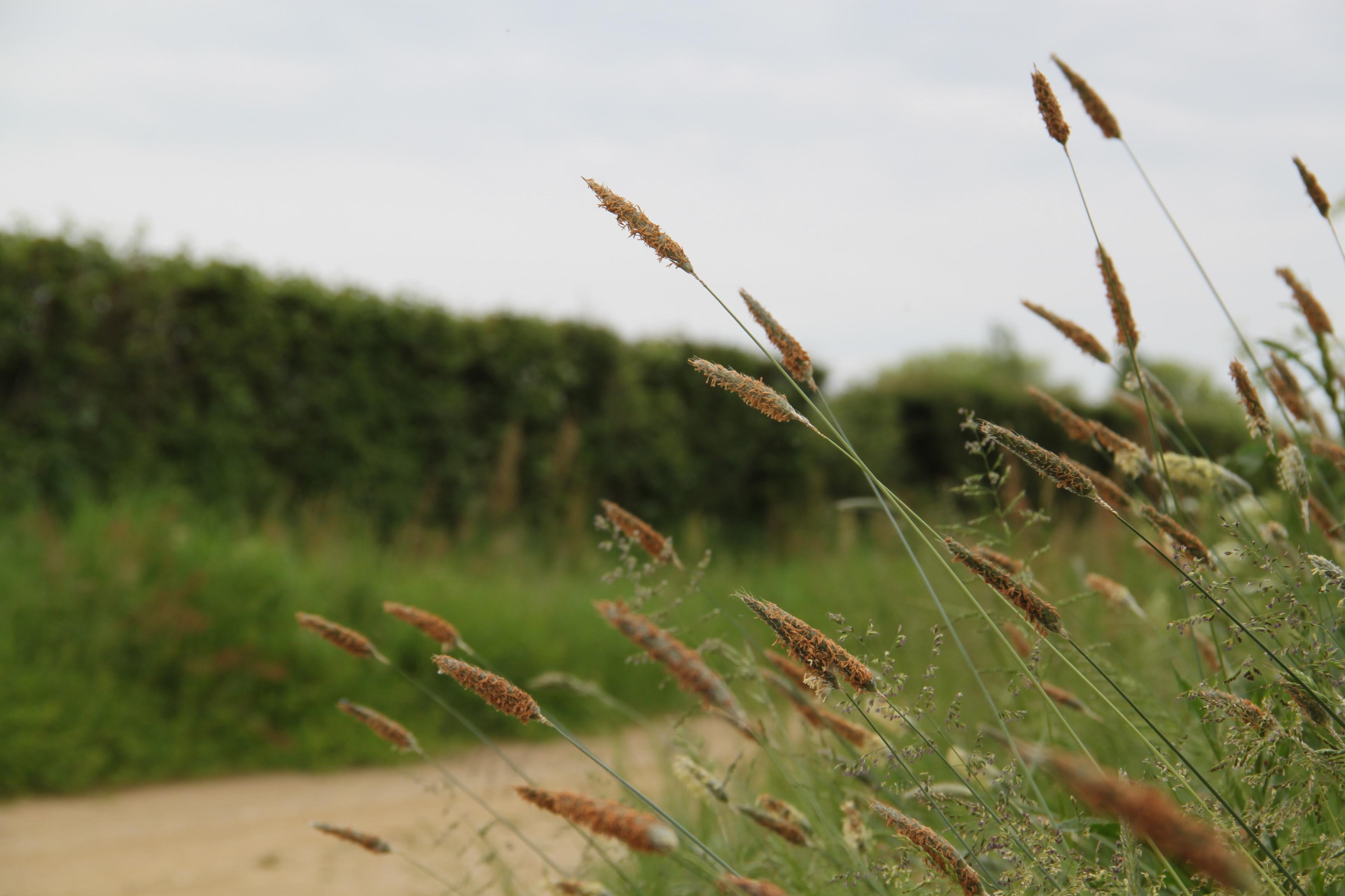 agriculture8.JPG