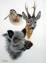 image de chasse.jpg