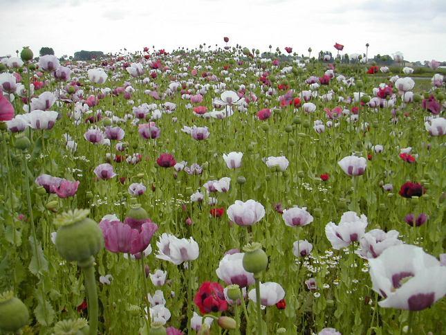 Verlinghem fleurs2.jpg