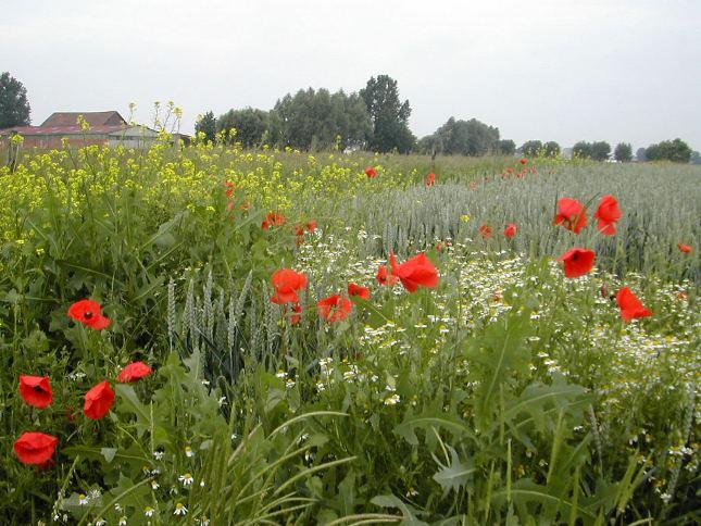Verlinghem fleurs1.jpg