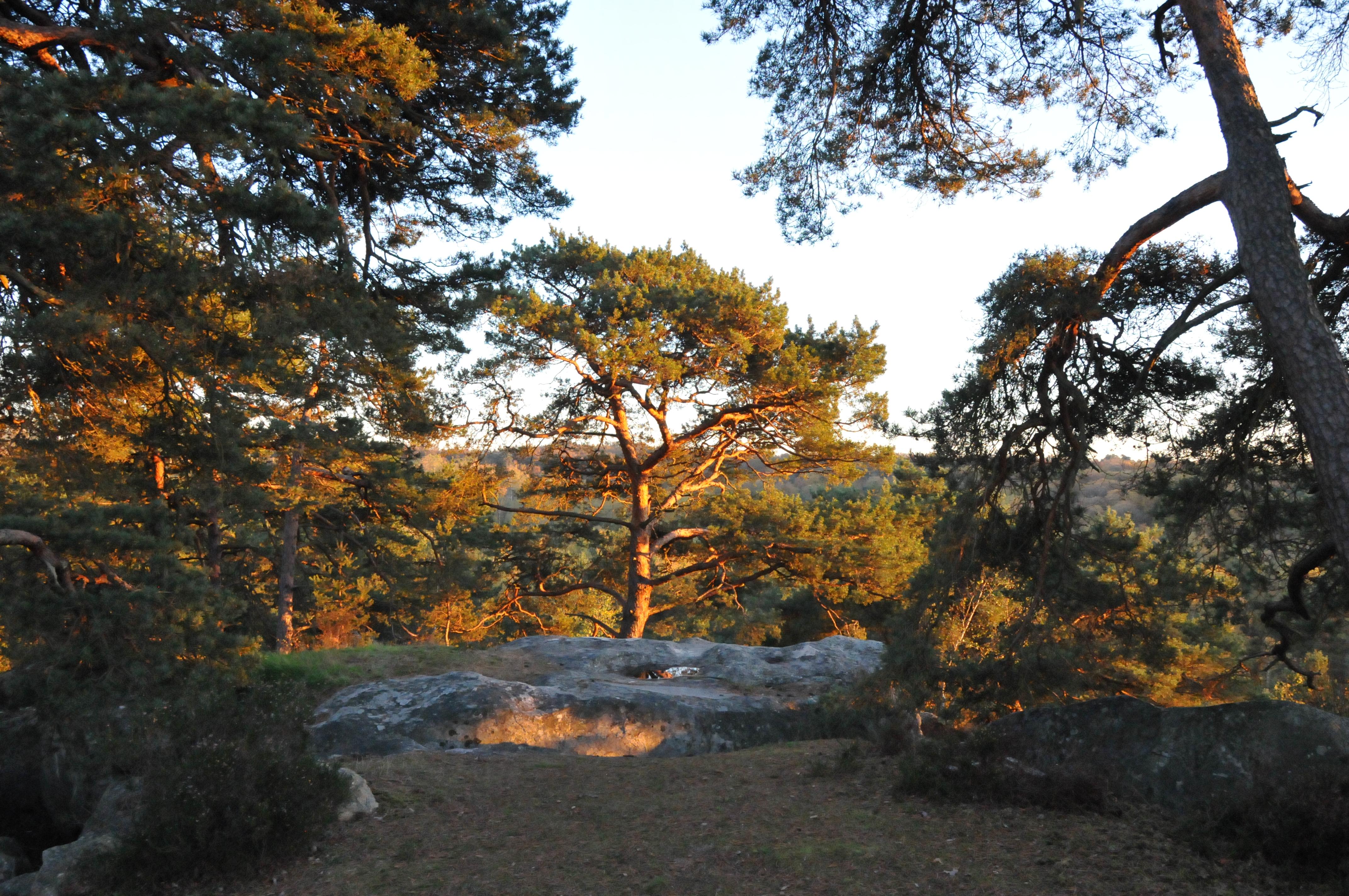 Platière coucher de soleil.JPG