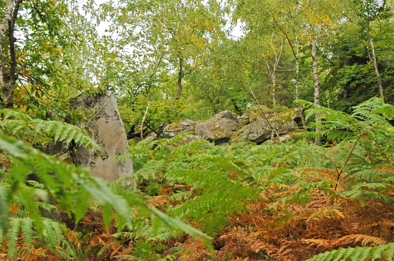 Sous Bois forêt de Coquibus via Courances.JPG