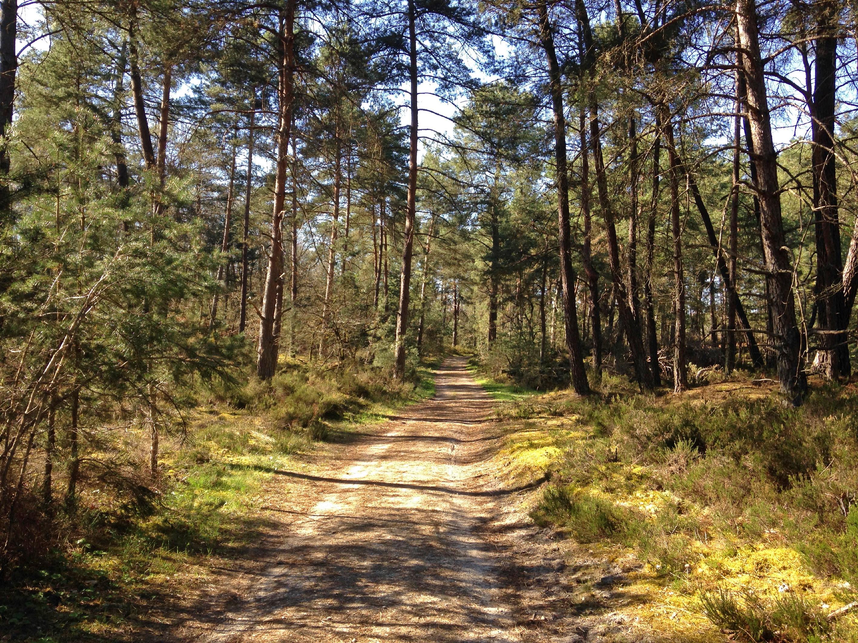 Trois Pignons - Chemin forestier.jpg