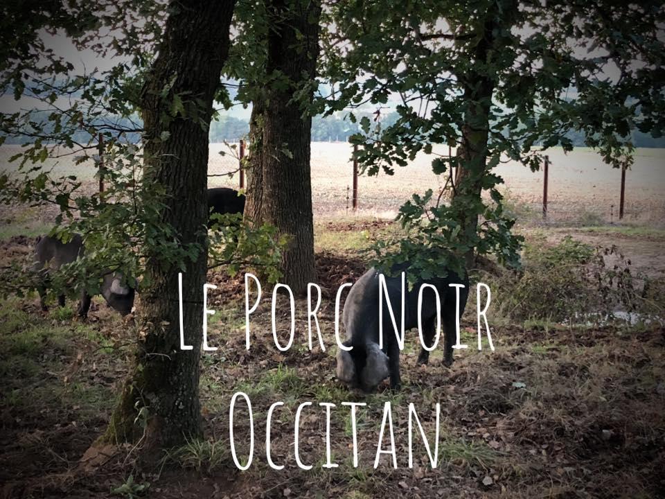 porc_noir_occitan.jpg