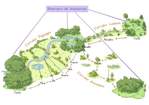 illustration réservoir biodiv - Fanny LE BAGOUSSE - Petite illustration.png