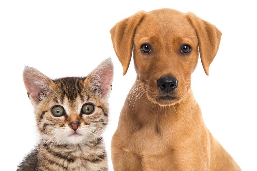 assurance-chien-chat.jpg