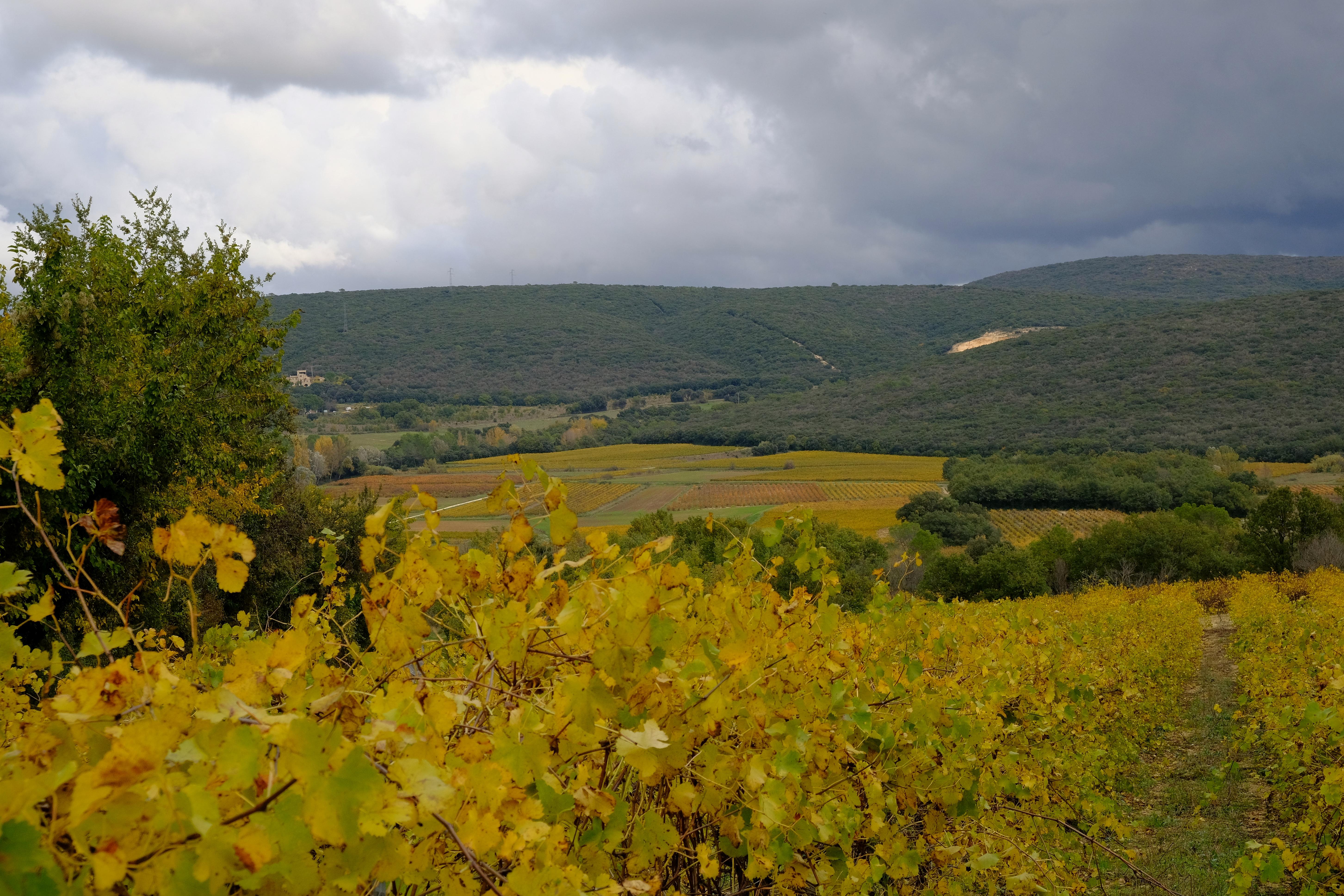 Paysage Mont Redon