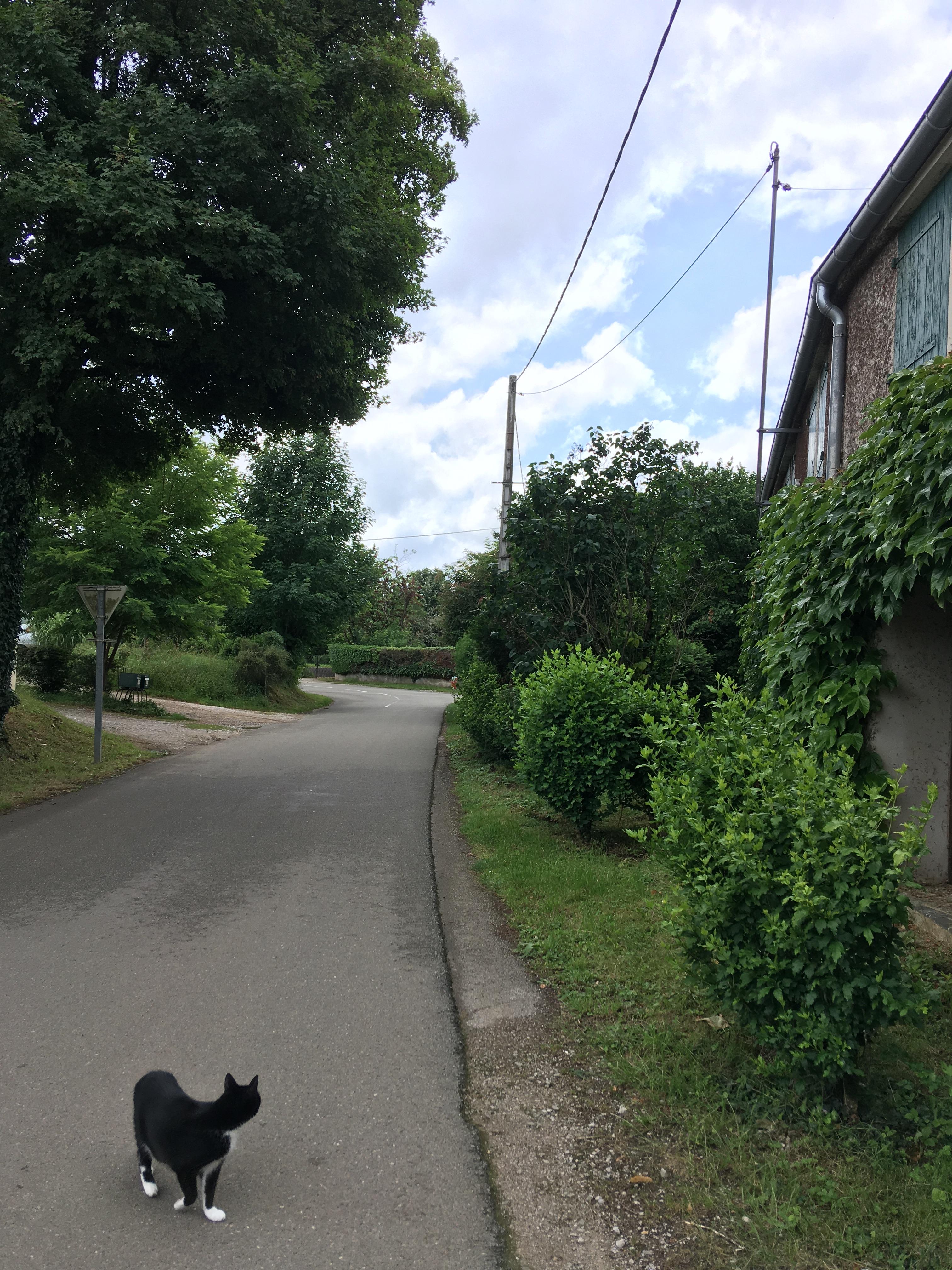 présence végétale rue de la colonie.jpg