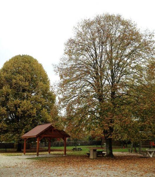 abri barbecue parc et arbres.jpg