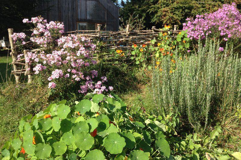 jardin caro.jpg