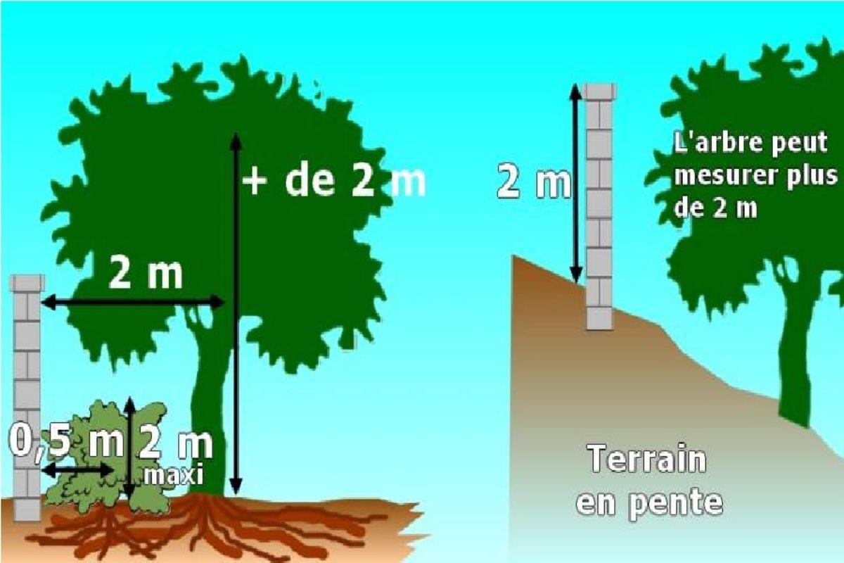 hauteur plantation.jpg