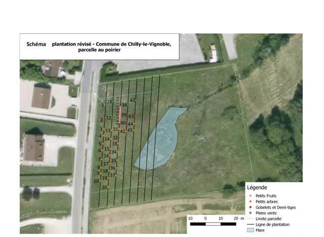 verger schema plantation 3.jpg