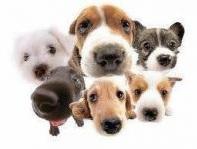logo happy dog school.jpg