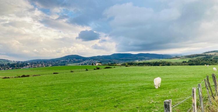 vache et nuages.JPG