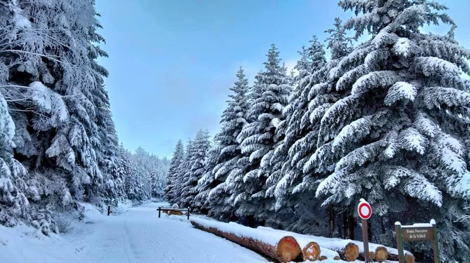 Ta Nia - 2021-01-09 - Route forestière Schleif.jpg