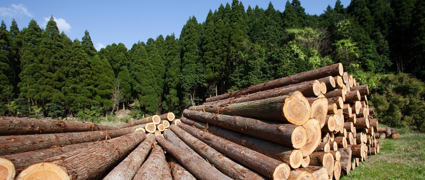 exploitation forestière.jpg