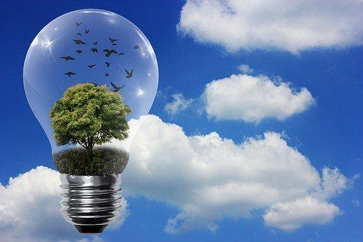 ampoule eco responsable.jpg