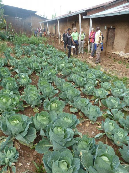 jardin BL.jpg