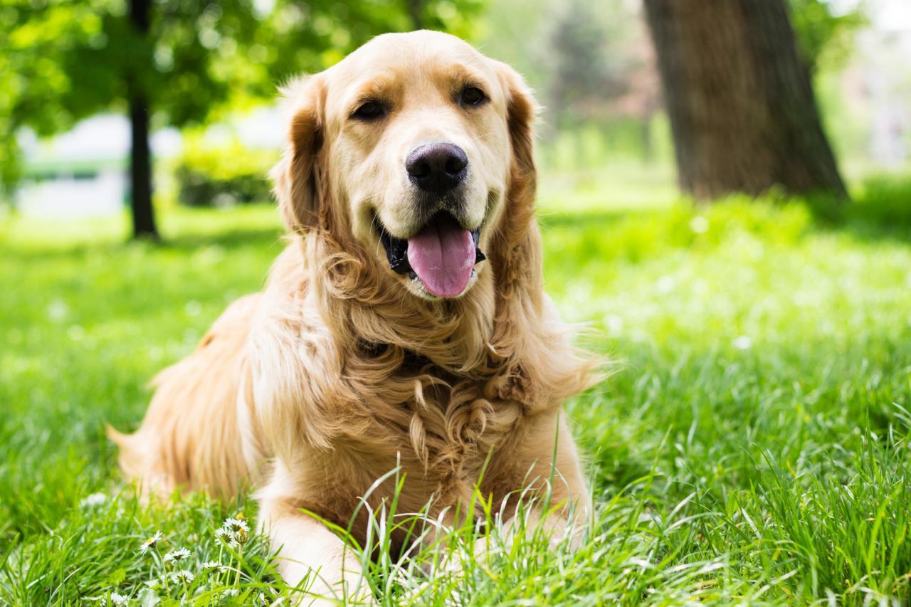 divagation des chiens.jpg