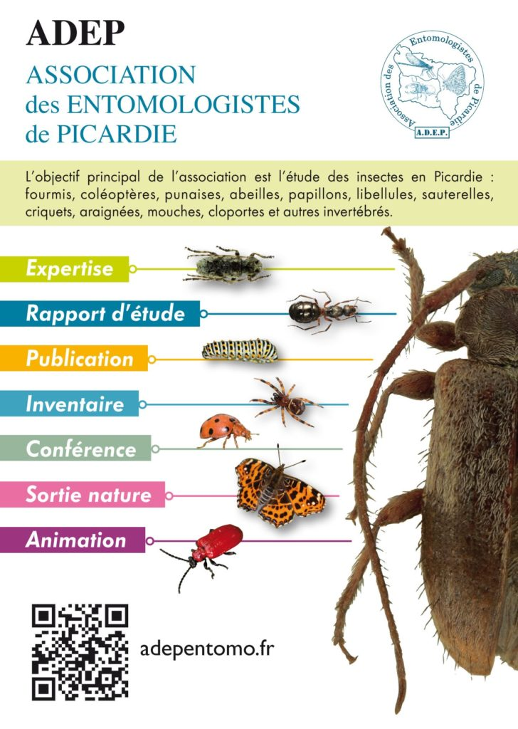 FLYER-ADEPrecto-728x1024.jpg