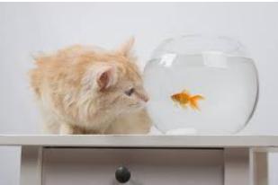 poisson et chat libre de droit.png
