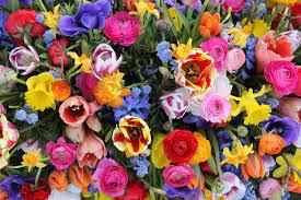 fleurs de printemps.jpg