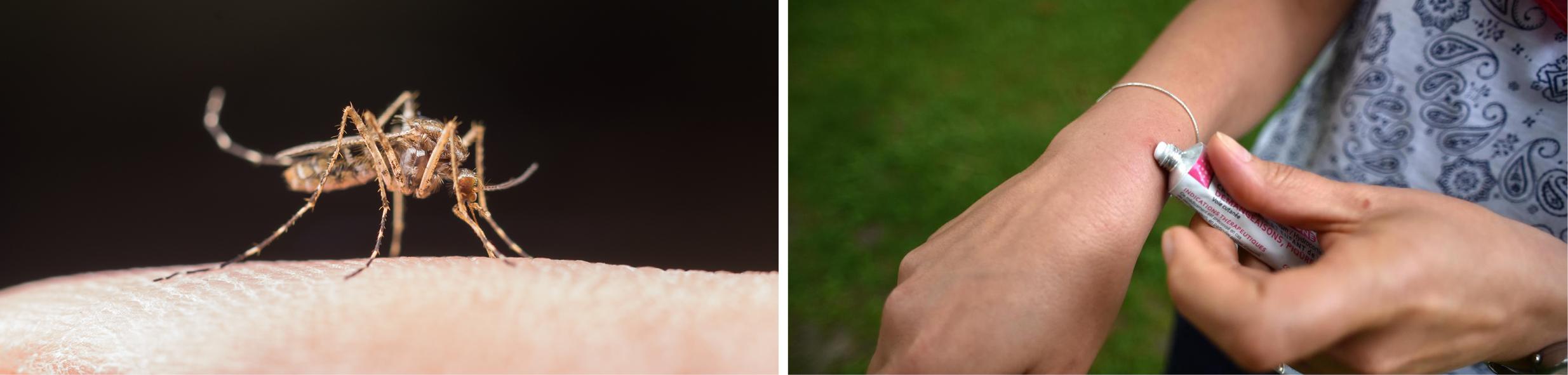 Bandeau - Lutte contre les moustiques.jpg