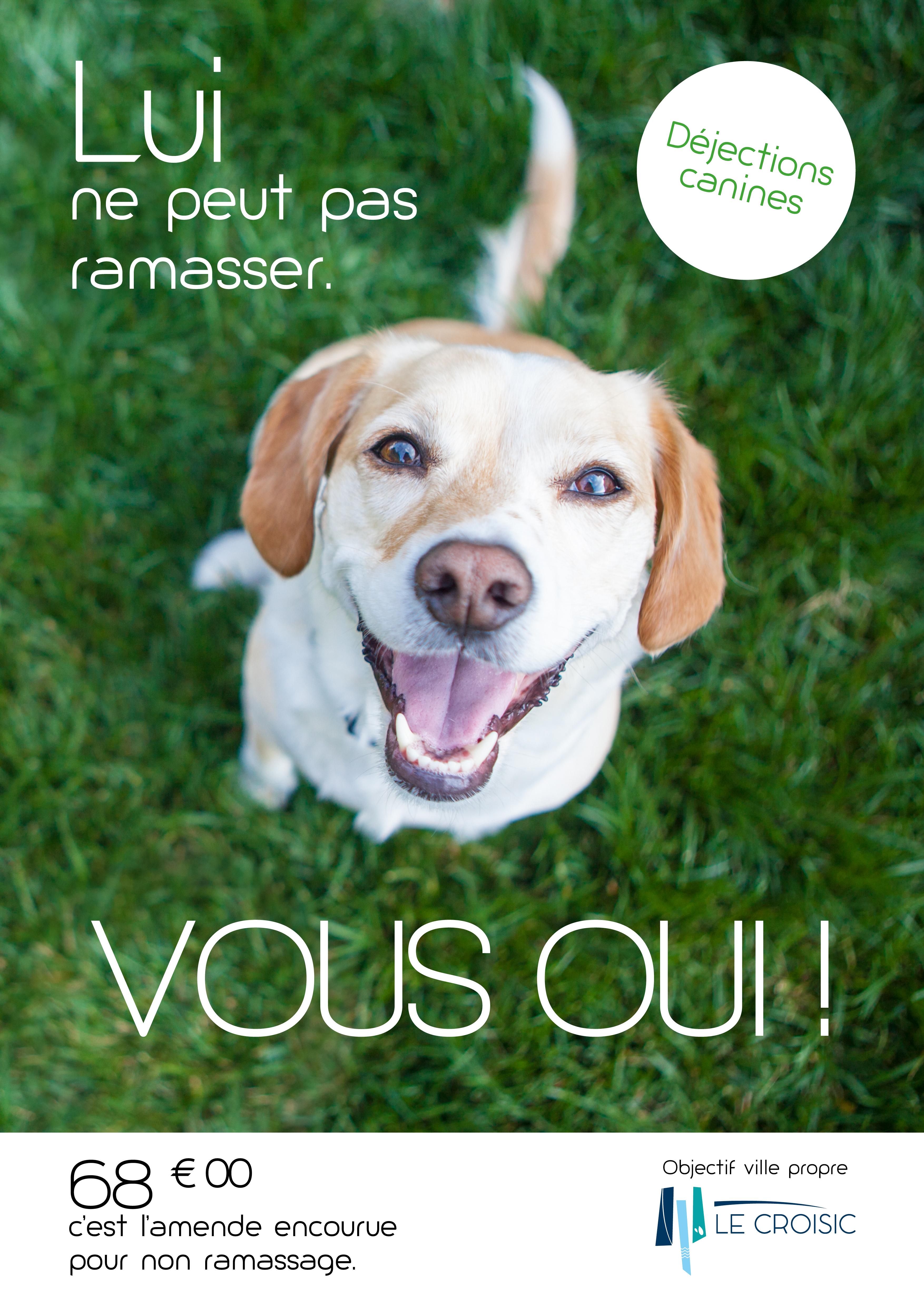 Déjections canines - Affiches sensibilisation.jpg