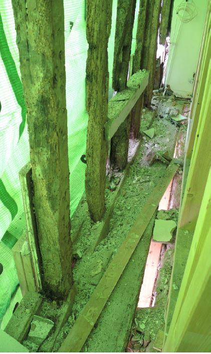 structure bois libérée.JPG