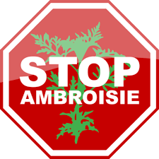 stop ambroisie.png