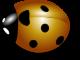 logo-amapj.png