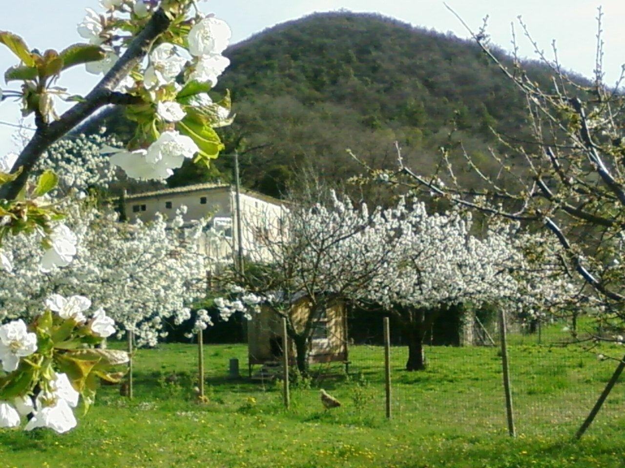 20130416 mirmande fleurs _5_.jpg
