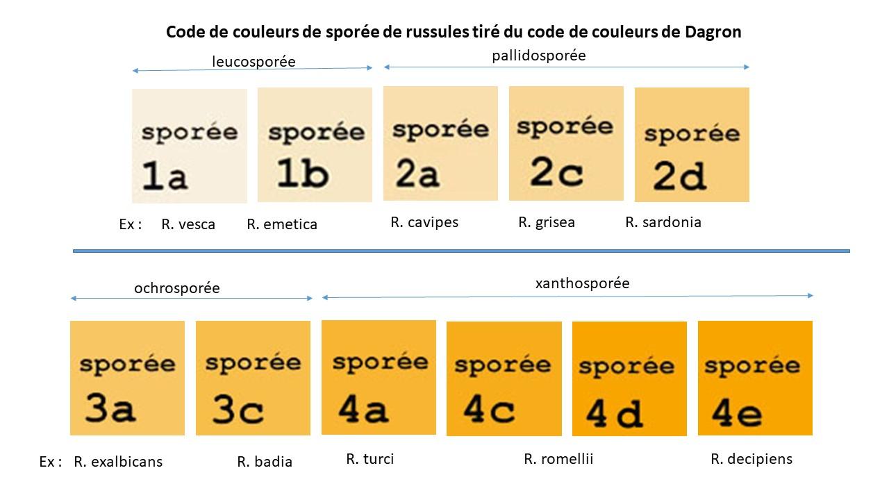 code couleurs russules.jpg