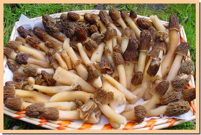verpes de Bohême.jpg