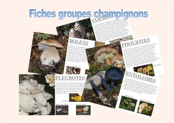 fiches groupes champignons.jpg
