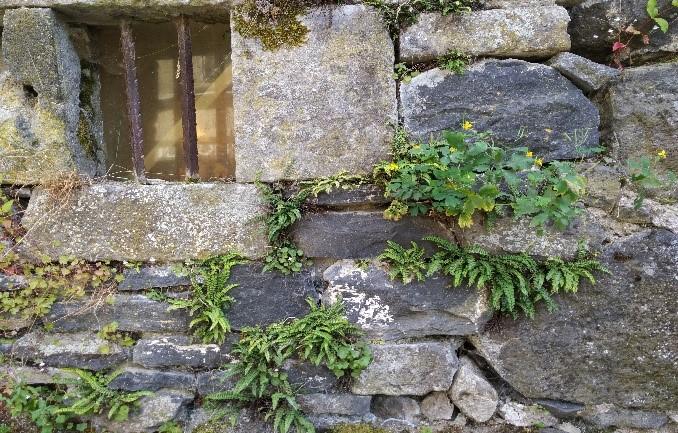 vieux mur à Salers.jpg