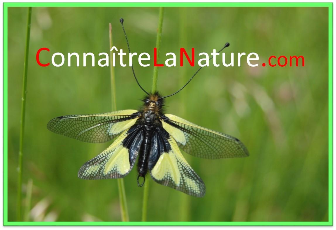 ConnaitreLaNature.com