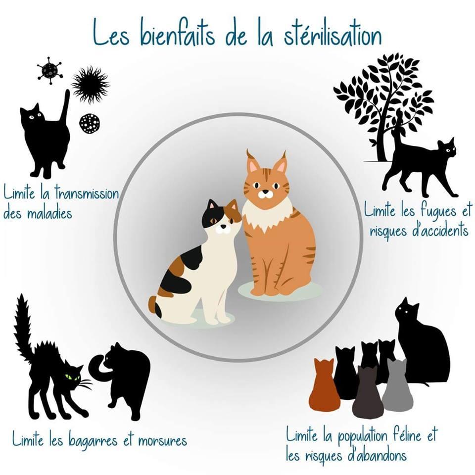 la stérilisation du chat.jpg