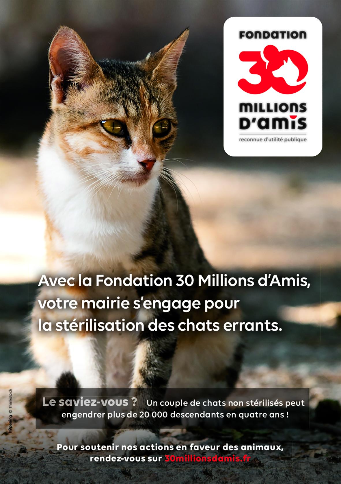 Affiche-mairie-chat.jpg