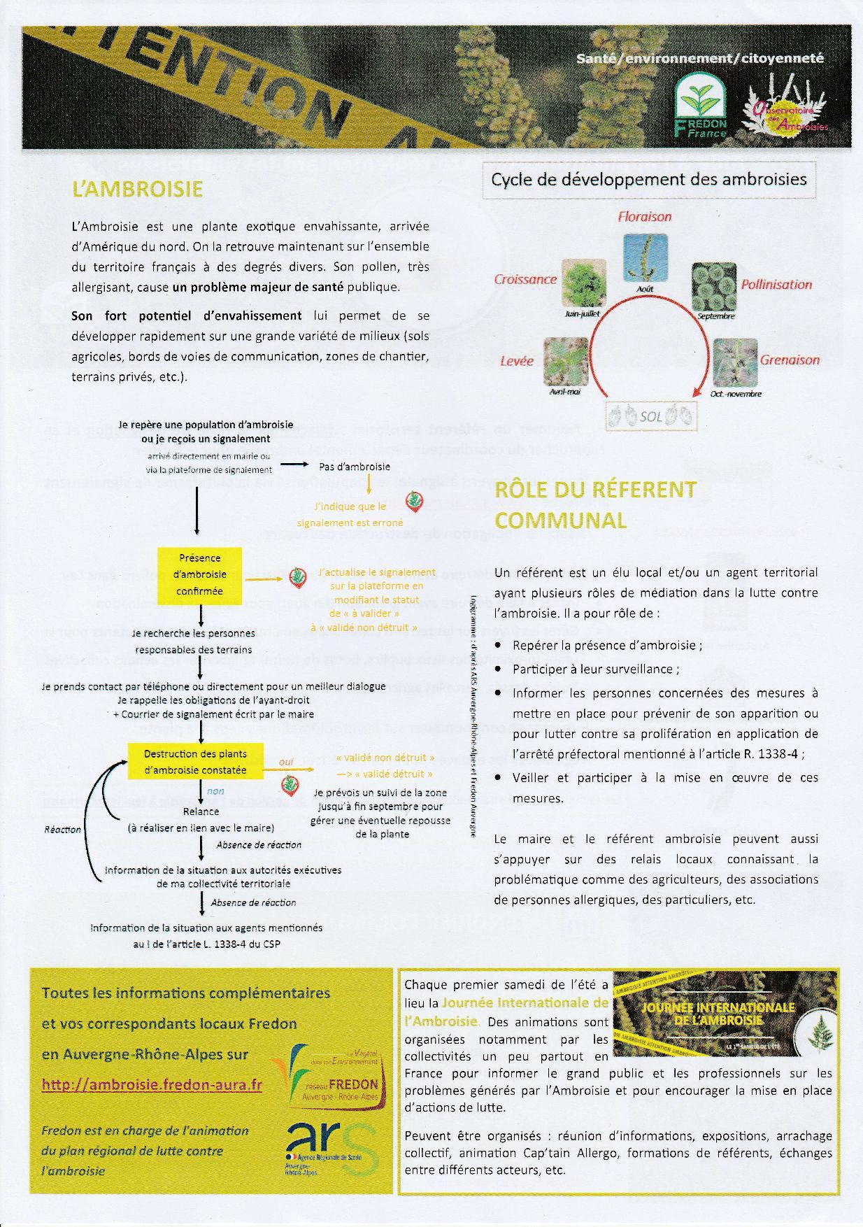 Ambroisie 2.jpg