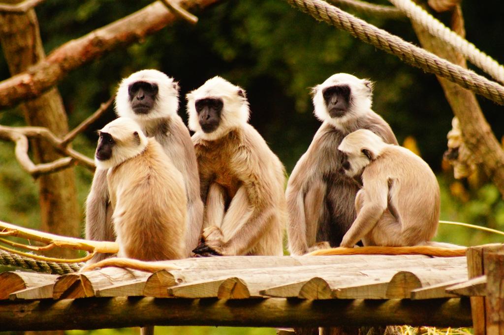 zoo-de-tregomeur-22.jpg