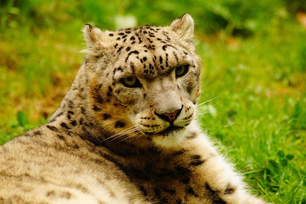 zoo-de-tregomeur-11.jpg