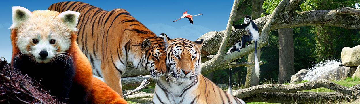 header-zoo.jpg