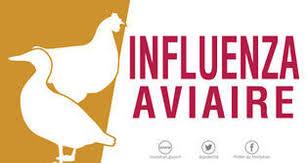 Influenza aviaire.jpg
