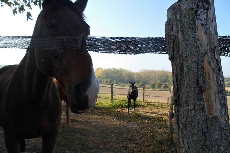 Paysage - chevaux Montigny2