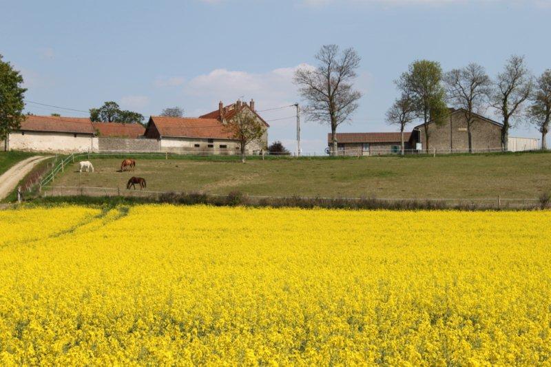 Paysage - ferme de montigny