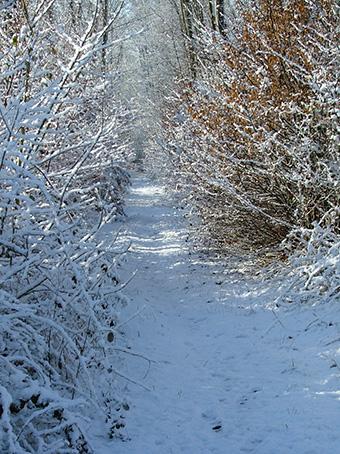 Chemin sous la neige