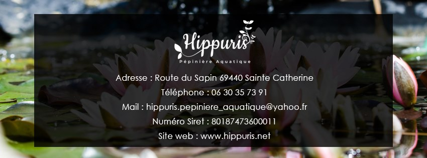 Hippuris
