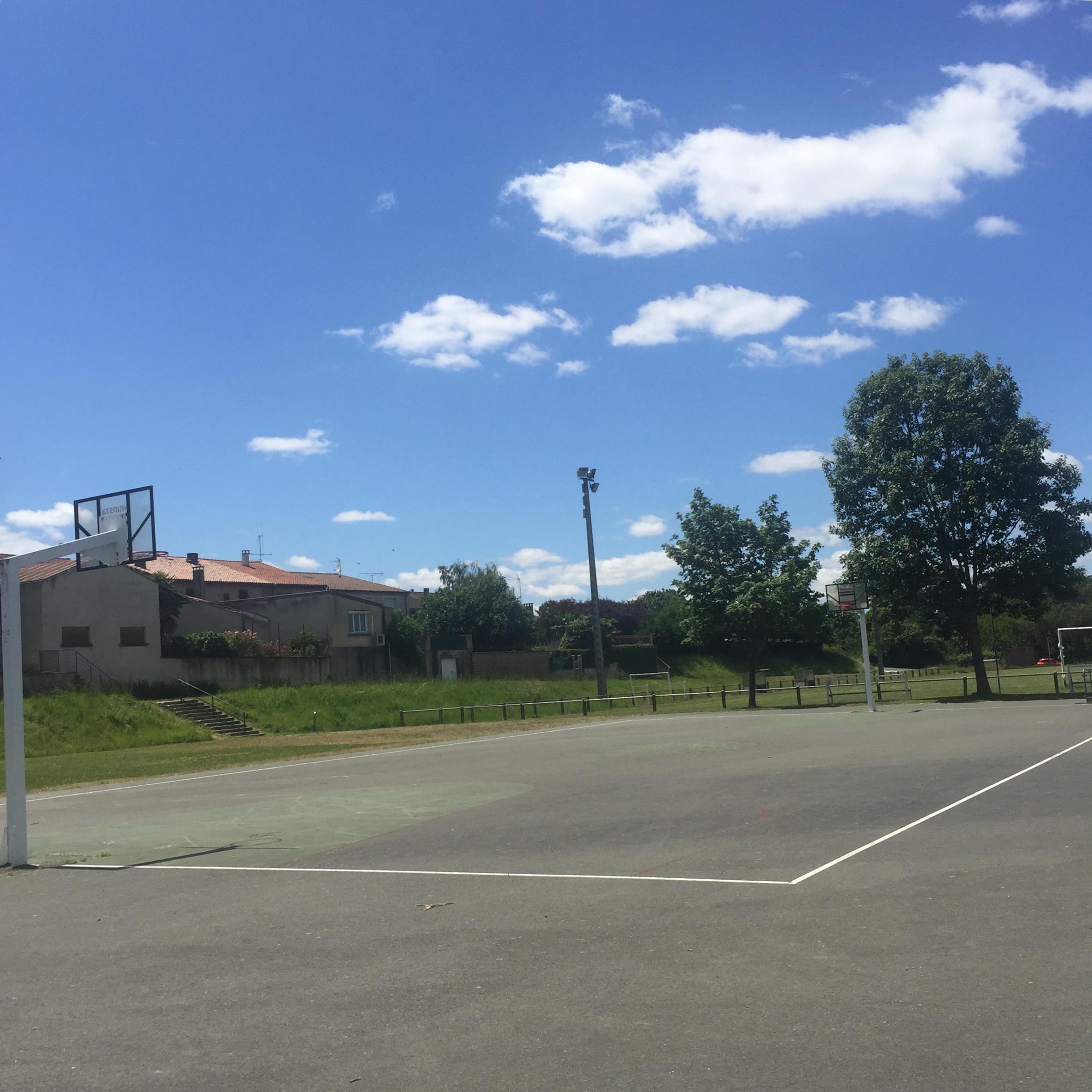 terrain basket _2_.jpg